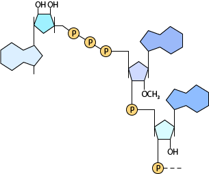 BioCap